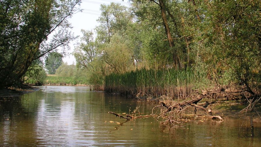 Water Events Biesbosch